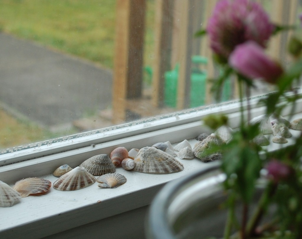 shells-and-clover-1024x8121